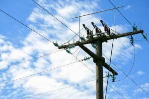 telephone-pole-fir